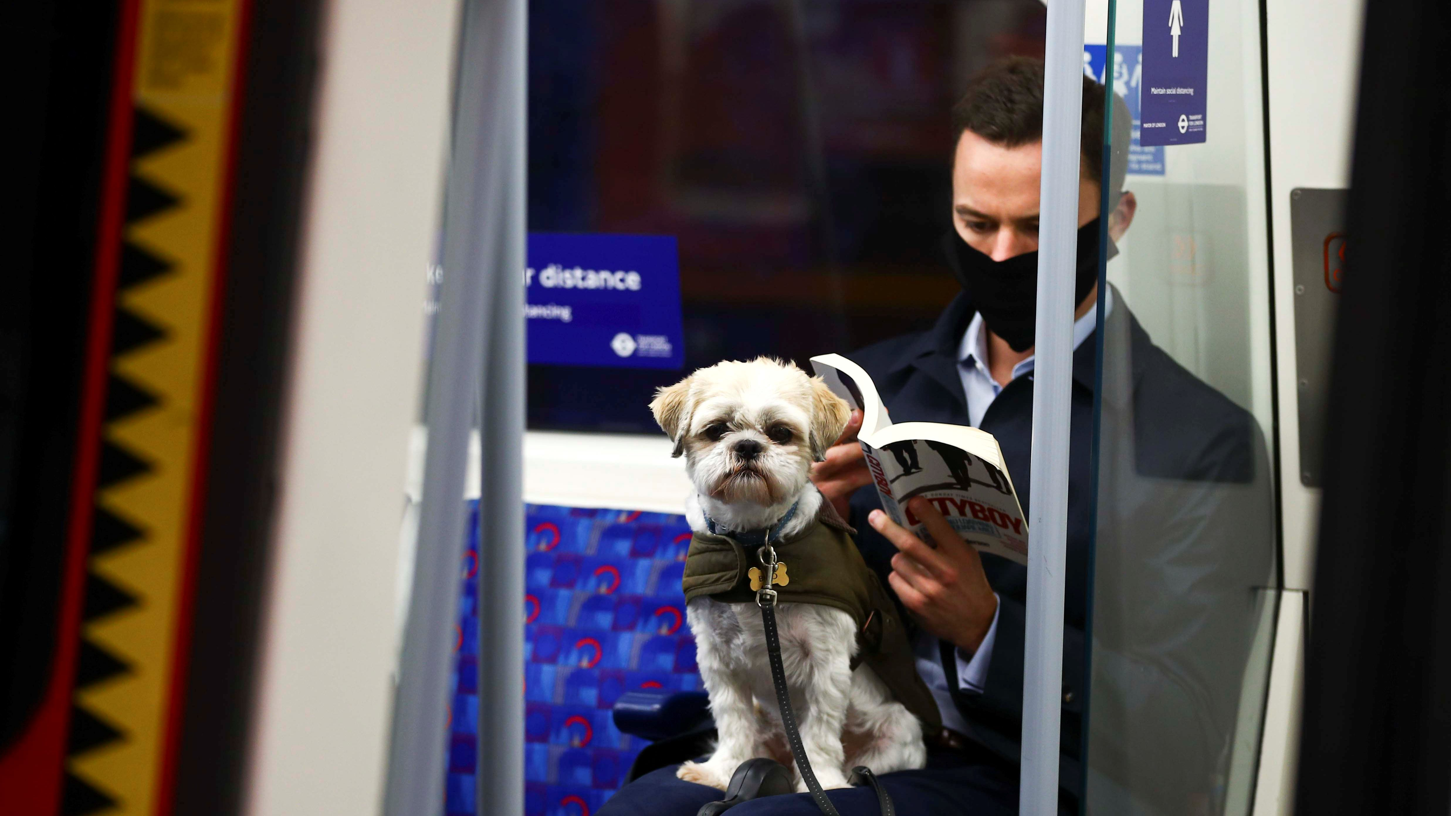 A dog sits on its owner's lap on the London tube