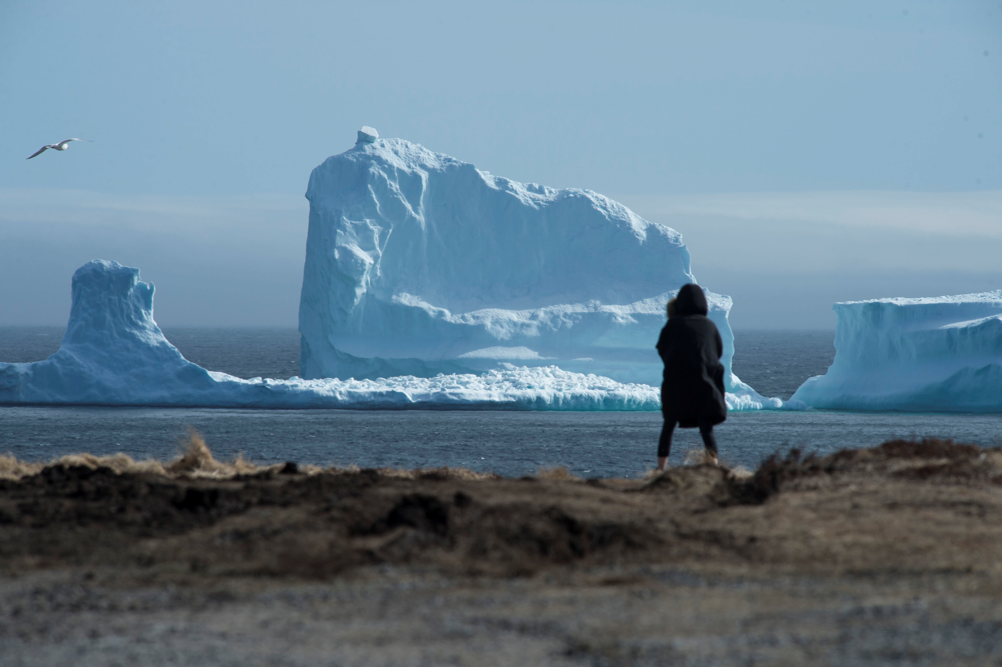 """A resident views the first iceberg of the season as it passes the South Shore, also known as """"Iceberg Alley"""", near Ferryland Newfoundland, Canada April 16, 2017."""