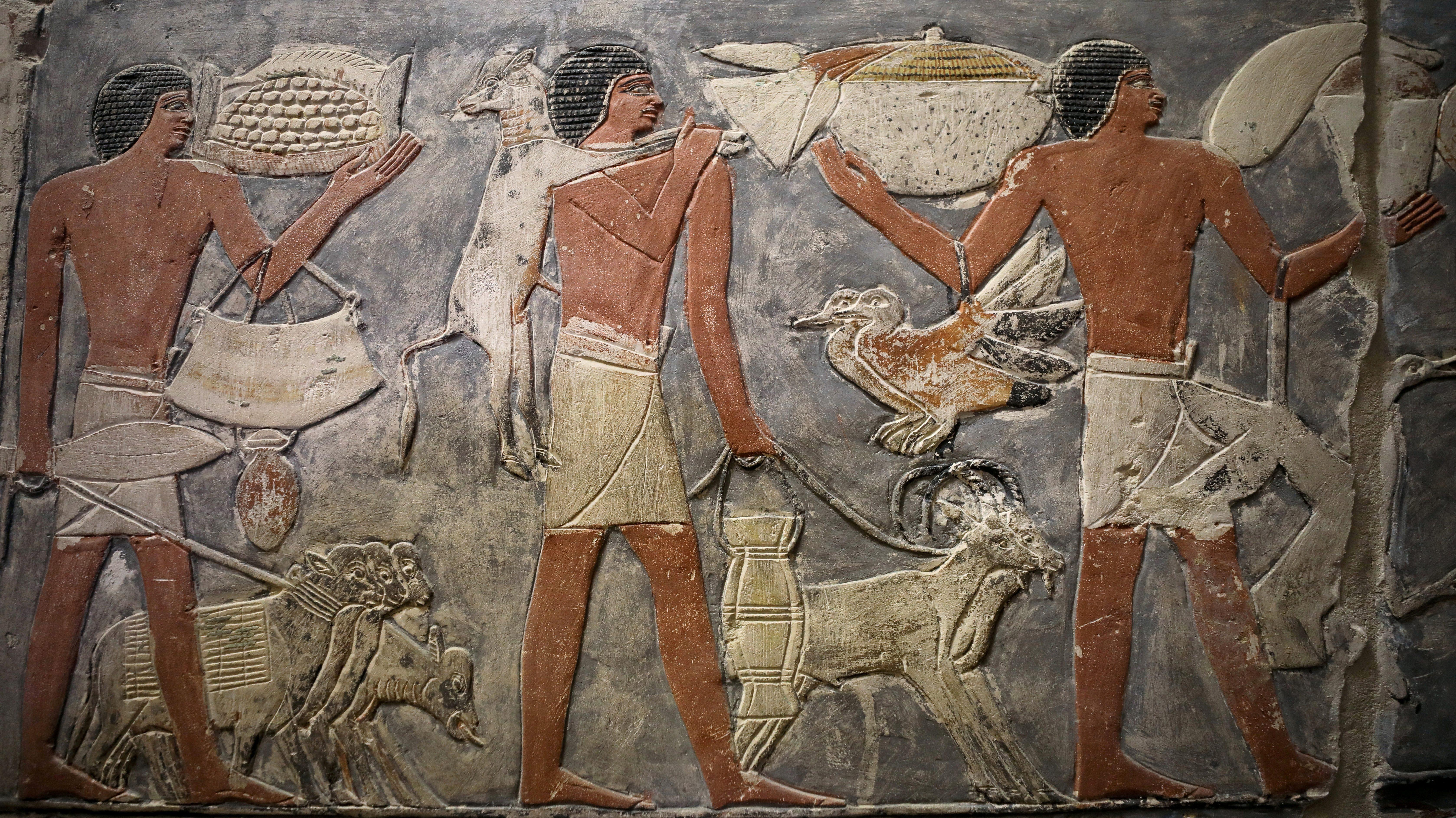 A wall of Egyptian Hieroglyphics
