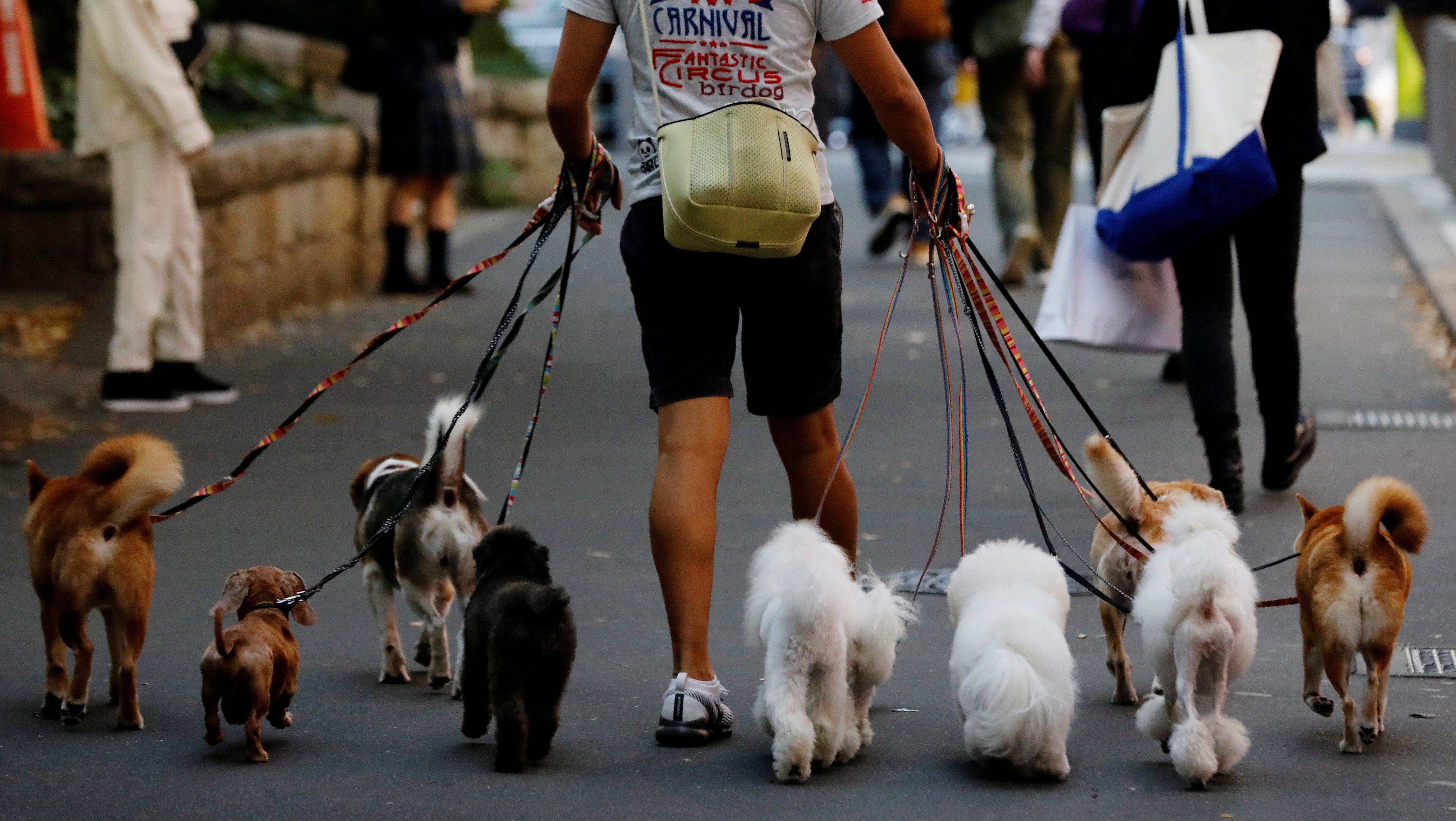 Rover, a dog-walking app, is now worth $1.35 billion — Quartz