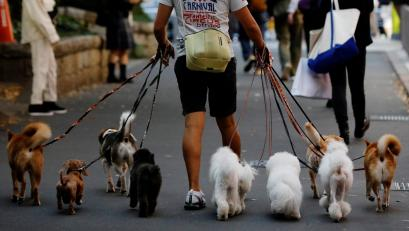 Dog walker Nobuaki Moribe takes a walk with dogs in Tokyo, Japan October 14, 2020.