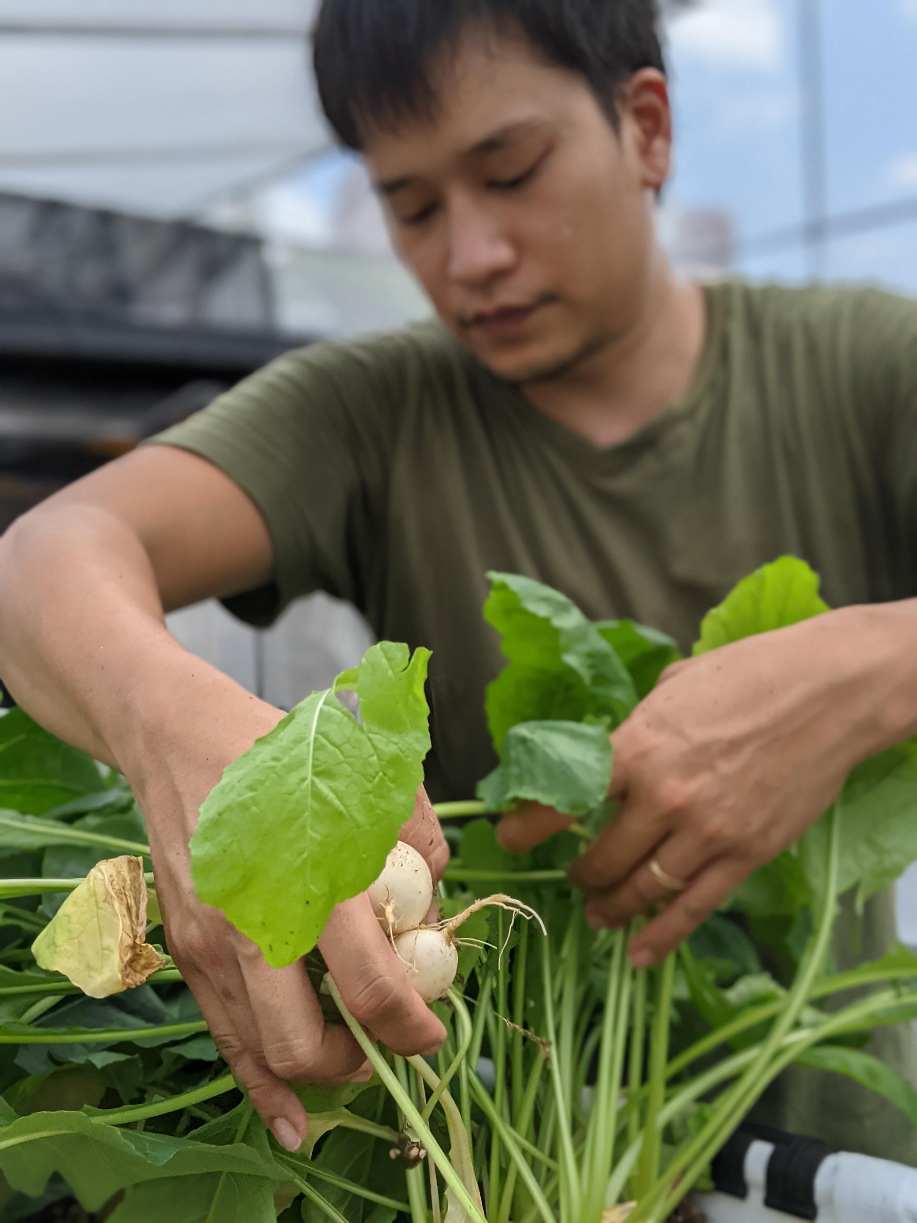 Ben Ang, founder of Natsuki's Garden, grows vegetables in his greenhouse.
