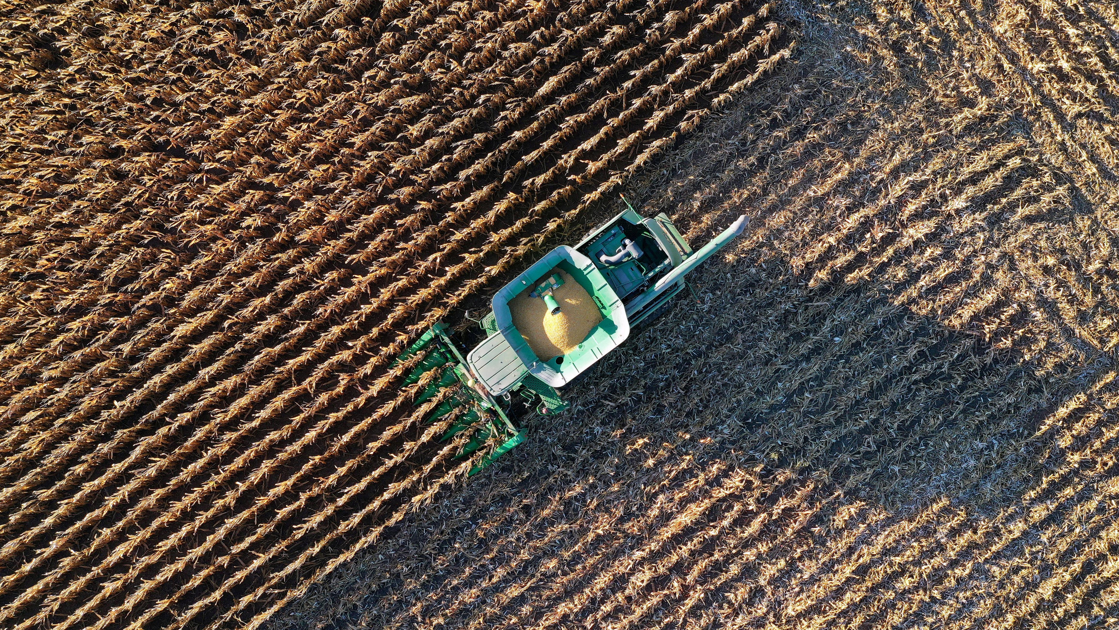 Farmer Roger Hadley harvests corn from his fields in his John Deere combine.