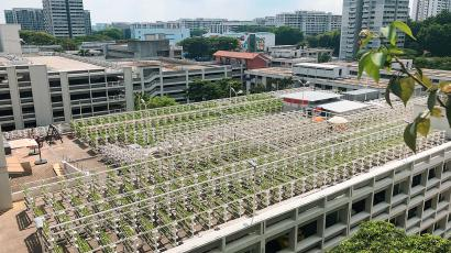 A hydroponic rooftop farm in Singapore.