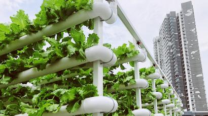 The Citiponics hydroponic system growing vegetables against the backdrop of a skyscraper.