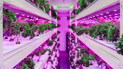 An indoor vertical farm by Sustenir Agriculture. Plants are on shelves with LED lights.