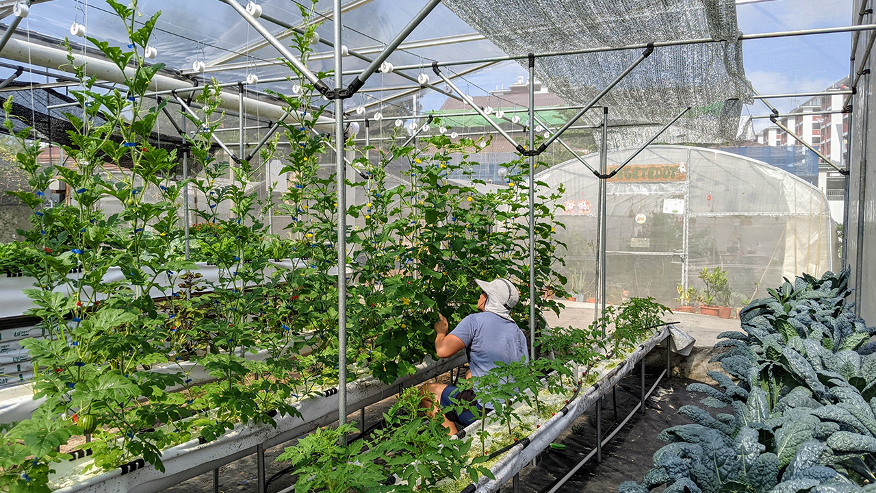 Ben Ang in his greenhouse, where he grows and tests plants.