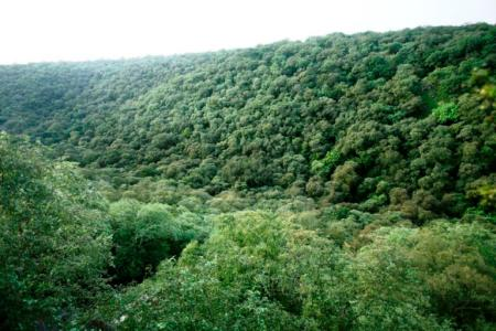 Mangar Bani, a sacred grove at the boundary of Gurugram and Faridabad district. It is the best-preserved native climax forest in Haryana's Aravallis.
