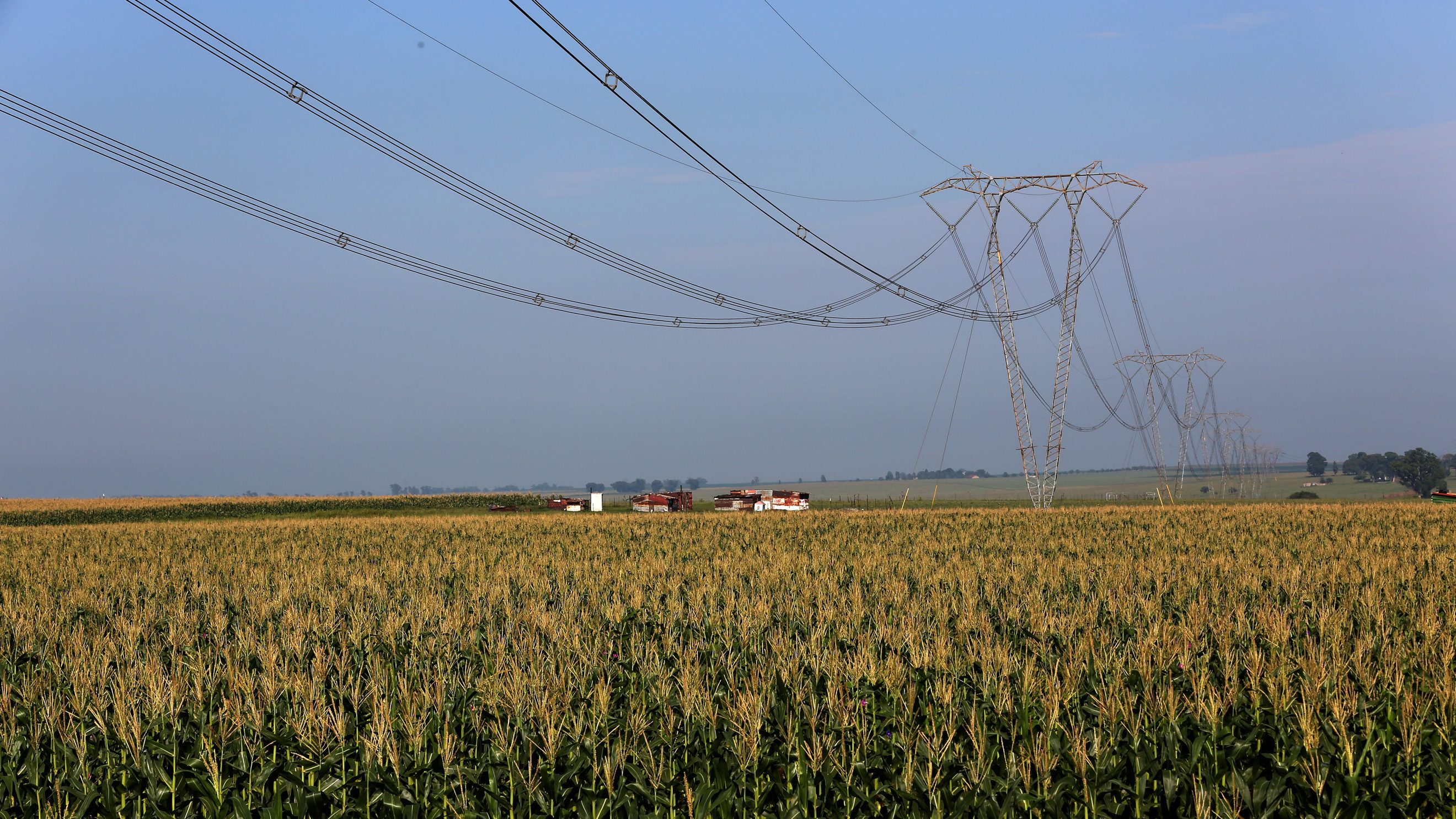 Electricity pylons of South Africa power utility Eskom are seen above a maize field in Mpumalanga province