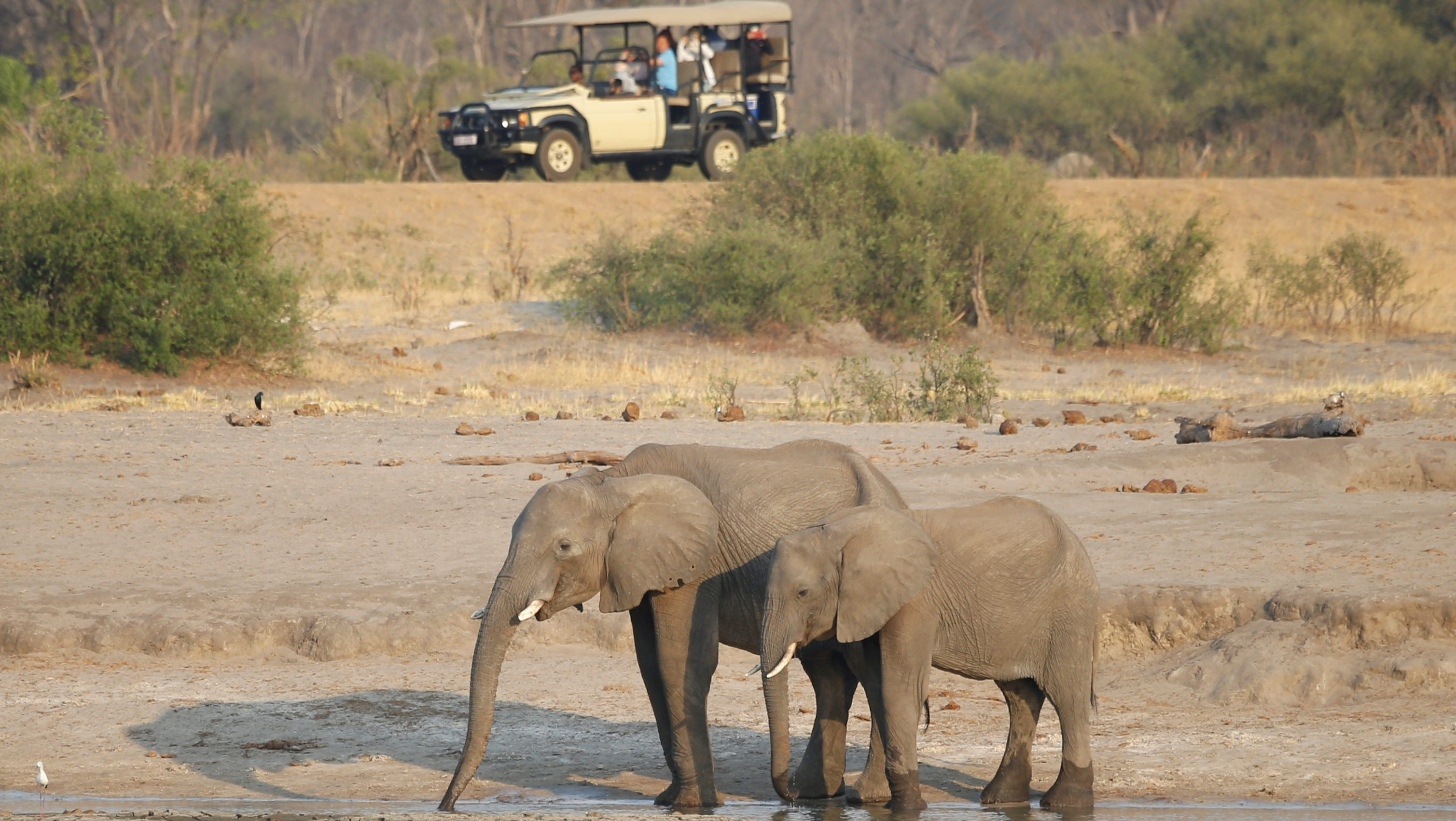 Tourists look at a group of elephants at Zimbabwe's Hwange National Park.
