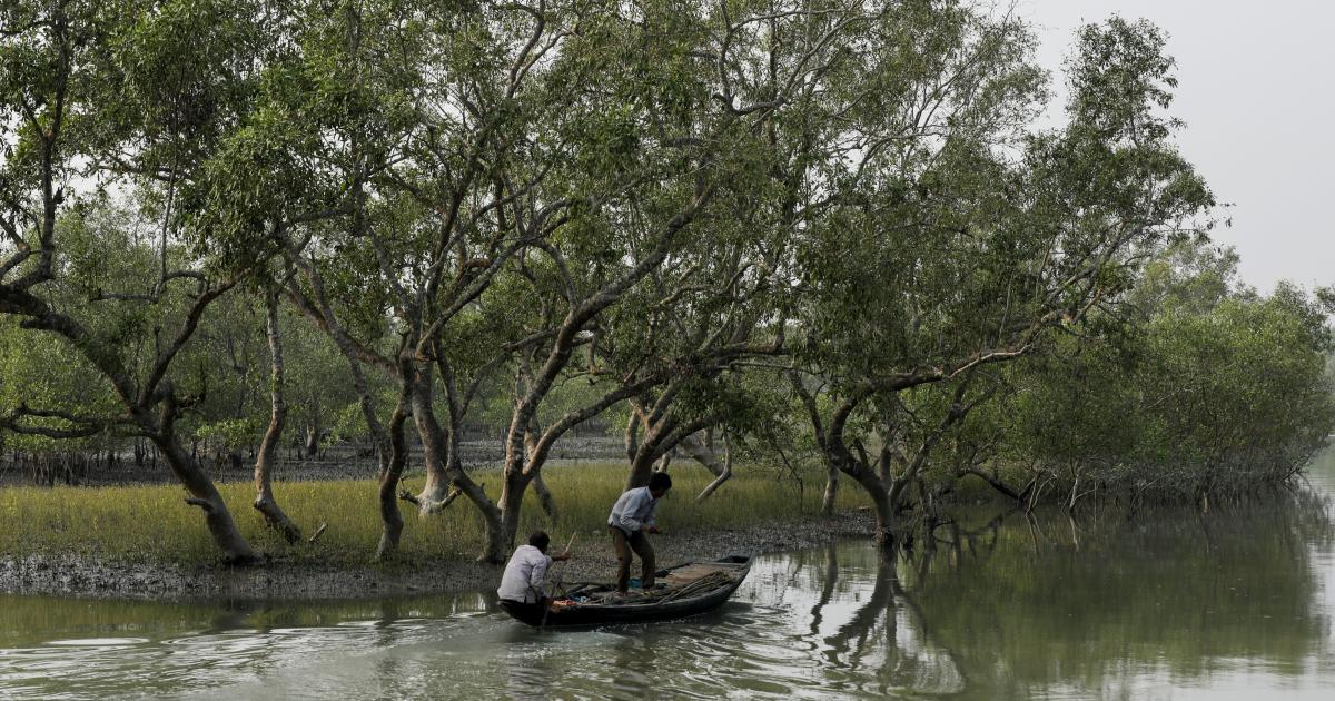 A proposed diamond mining project in India could lead to the felling of over 200,000 trees