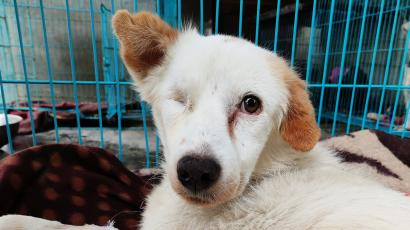 Bonnie - lost her eye due to stones being thrown at her. now lives at DAR (c) DAR