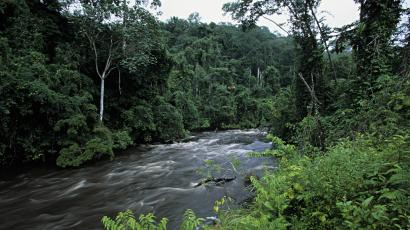 Gabon's tropical rainforest is pictured. Payments to Gabon to preserve its rain forests raise interesting debates about replicability and scalability of such initiatives.