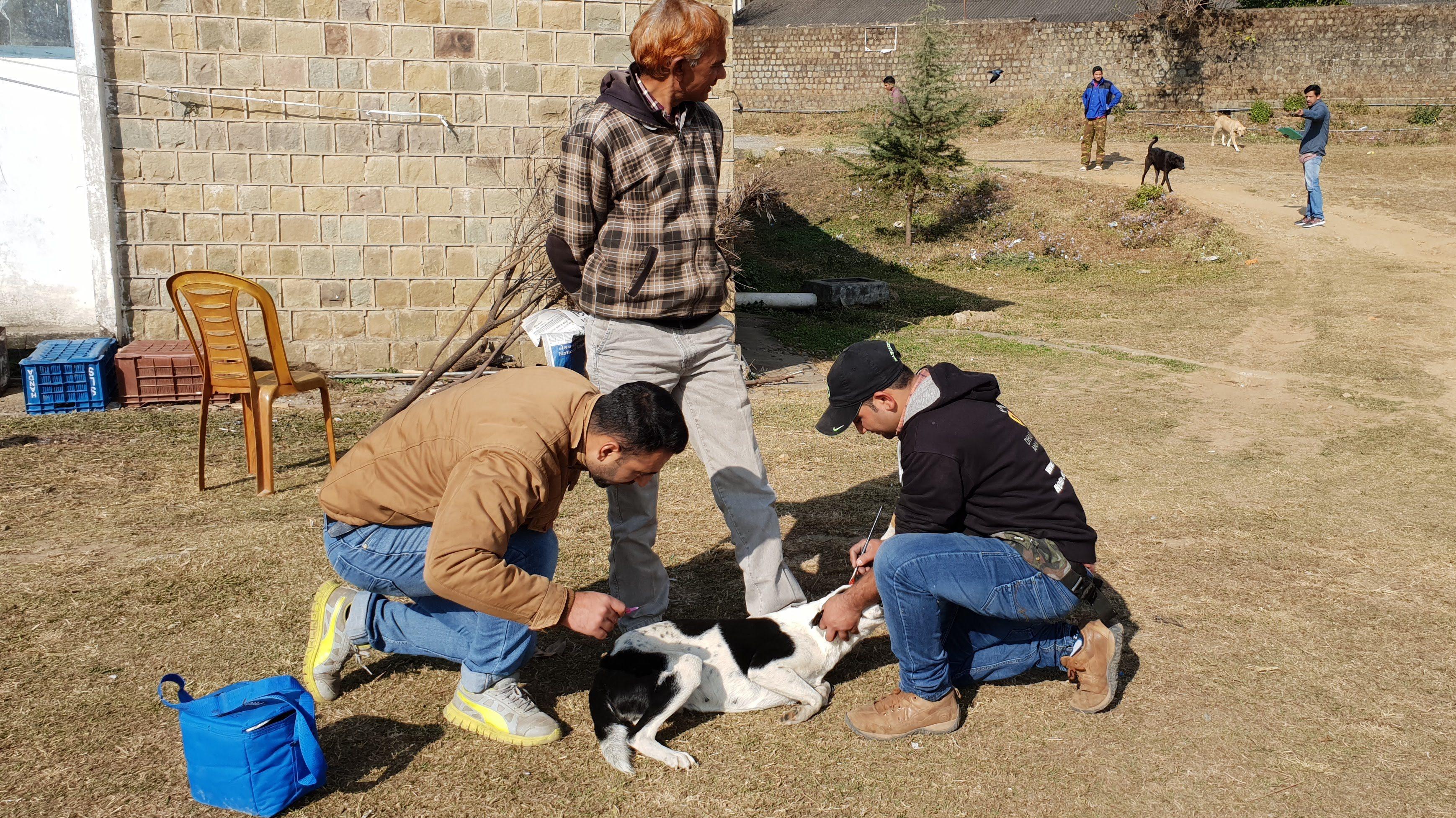 Campo de vacinação contra a raiva 2018 (c) Resgate de animais em Dharamsala (3)