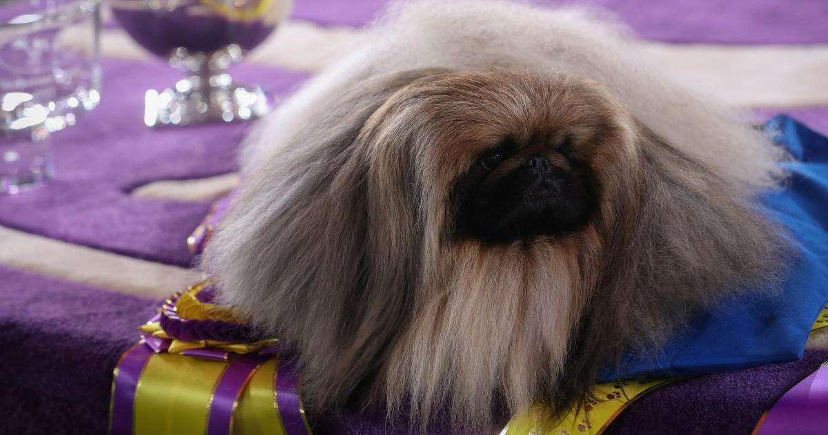 How to think like a winner (at the Westminster Dog Show)