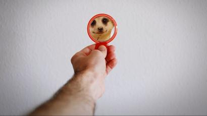 person holding mirror that shows a meerkat in the reflection