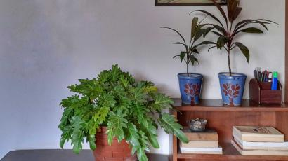 A plant kept indoors in India. Ventilation is a must for Covid-related good air quality.