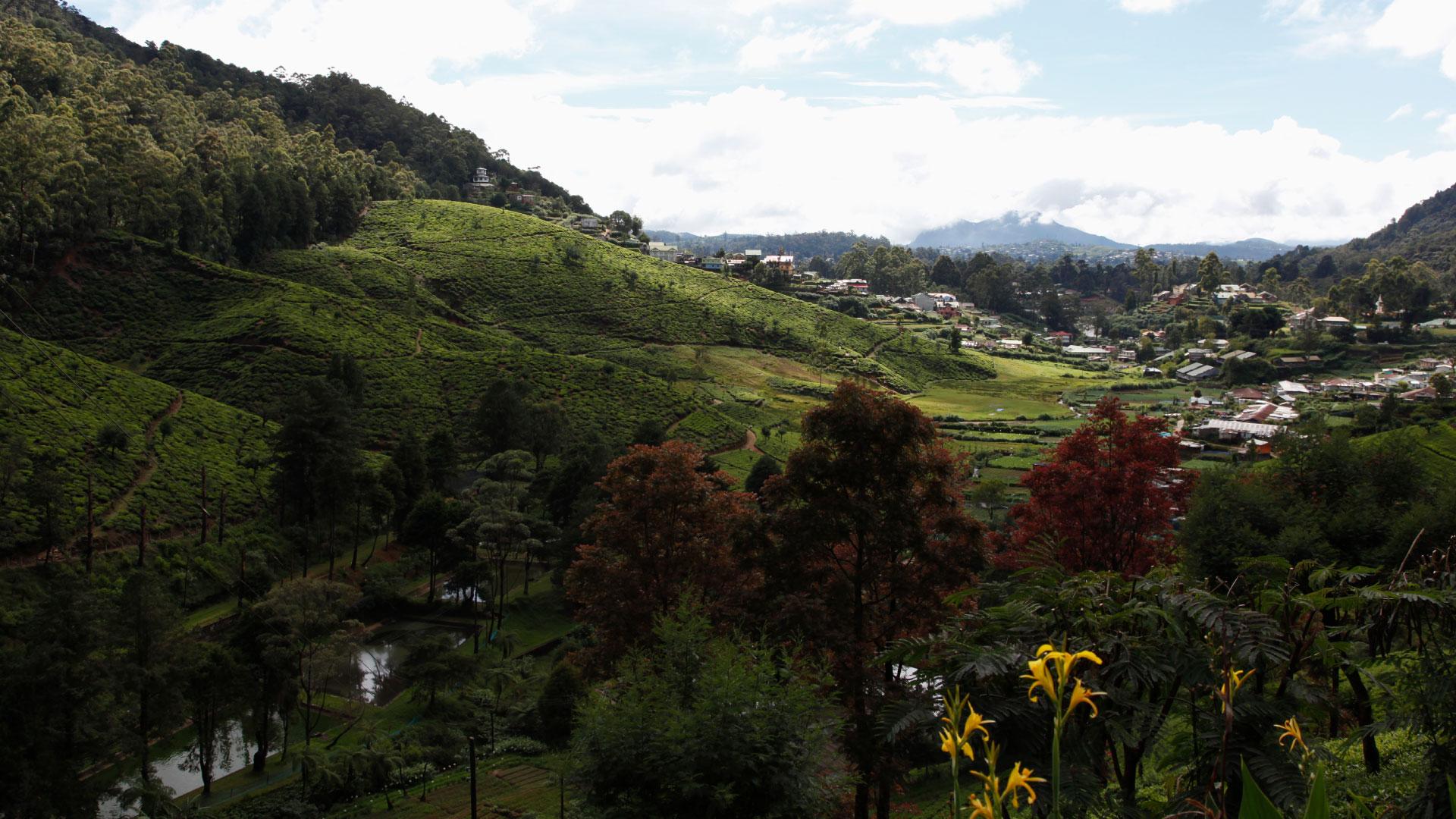 A photograph of hillside tea farms in Sri Lanka on a partly cloudy day.