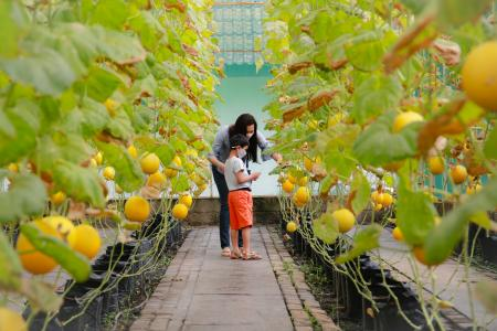 Melon Garden, a woman and a boy visiting a greenhouse inspecting the harvest.